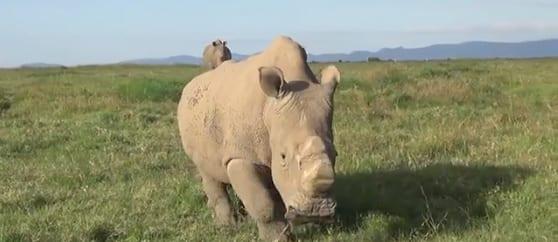 Airware Rhino Protection UAV Tests