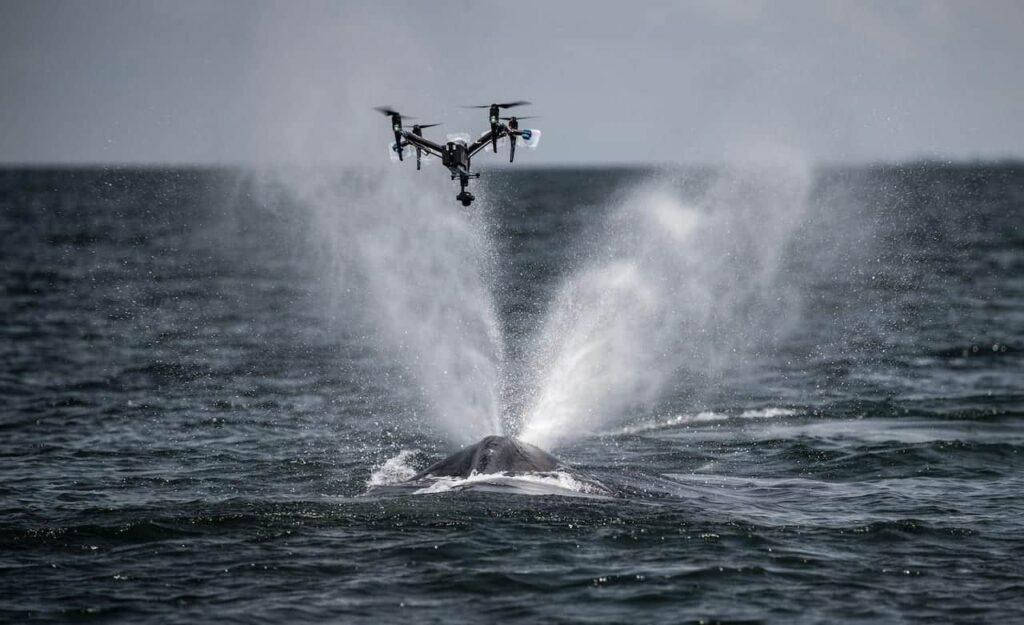 Whale conservation drone
